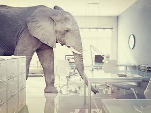 olifant-in-de-kamer